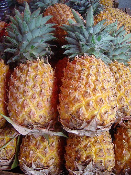 Ananas_comosus_dsc07804